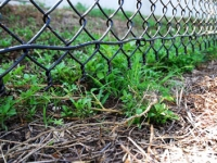 Residentail Chain Link Fence Solutions